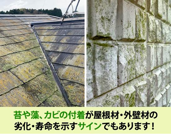 苔や藻、カビの付着が屋根材・外壁材の劣化・寿命を示すサインでもあります
