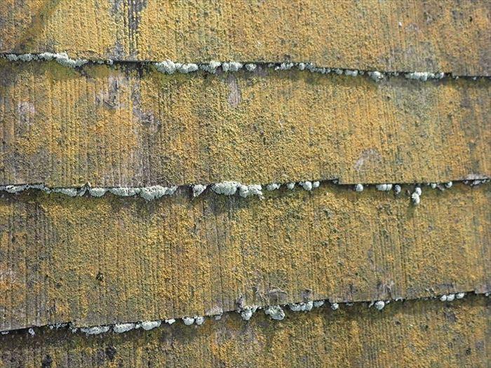 屋根に付着した苔藻