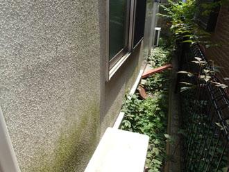 藻が発生したモルタル外壁