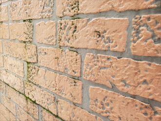 サイディングが界壁の防水性が低下し苔が発生