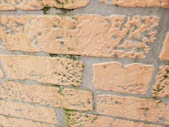 千葉市稲毛区山王町にてサイディング外壁の防水性が低下して苔が発生していました