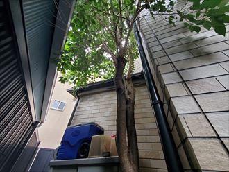 植栽が外壁に干渉すると破損に繋がります