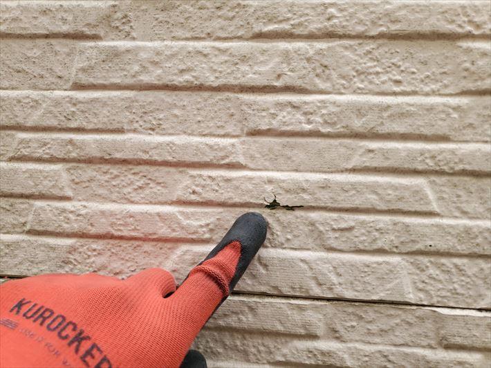 船橋市三咲にて苔が発生しているサイディング外壁の調査、塗膜の剥がれや素地の露出が見られましたので外壁塗装が必要です