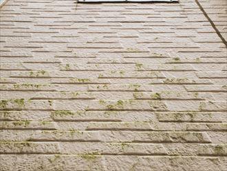 防水性が低下し苔が発生したサイディング