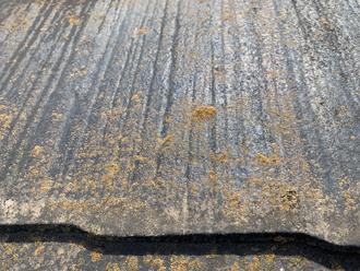 屋根の苔(詳細)