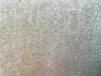 モルタルの苔