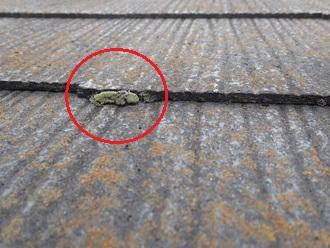 スレートの小口に苔が発生しています