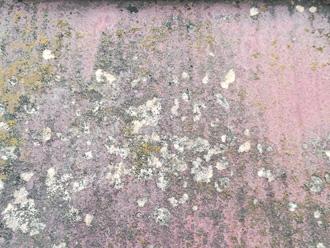 コケカビ藻