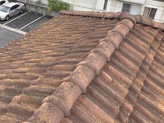 屋根全体の写真