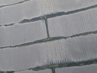 スレート小口の雨染みによって、苔が繁殖し始めています