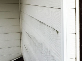 サイディング外壁に苔が繁殖