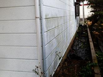 サイディング外壁に藻が繁殖