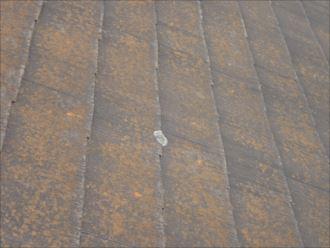千葉市花見川区み春野 屋根にスギ苔の発生