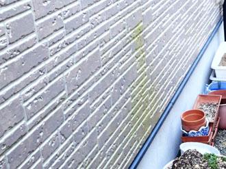 サイディング外壁に藻が発生