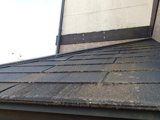 屋根にも藻が発生