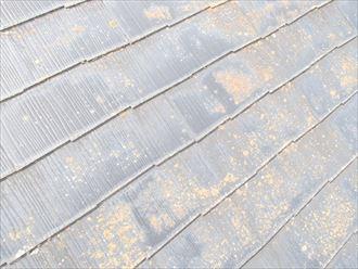 袖ケ浦市滝の口 苔の発生