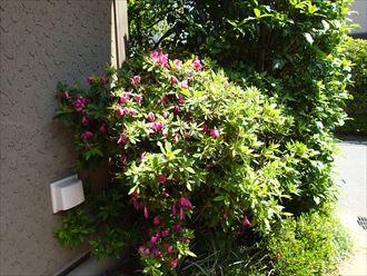 外壁の植物