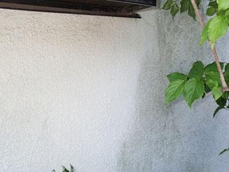 外壁にカビや藻