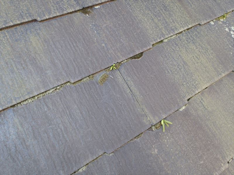 市原市屋根塗装前の現地調査、屋根の雑草