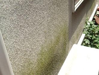 室外機で通気性が無くなり、藻が発生したモルタル外壁
