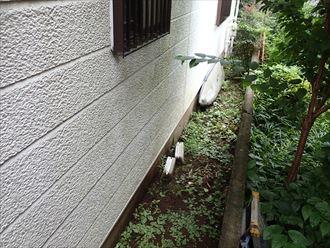 植物と外壁の汚れ