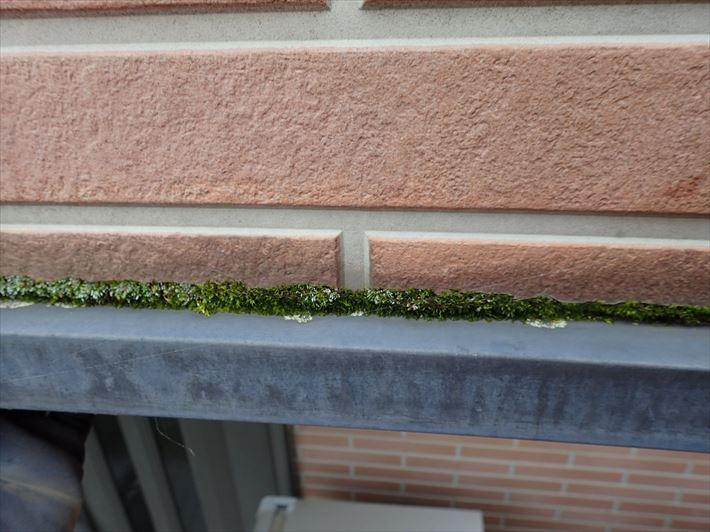 水切りを苔が埋めてしまうと雨漏りに繋がります