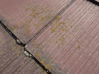 スレート屋根の藻