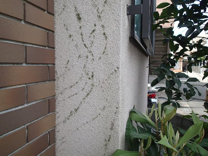 外壁にこびりつく根