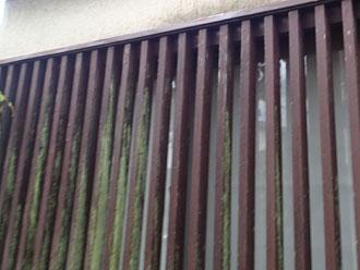 窓格子の苔