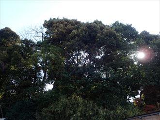 木々が多い地域