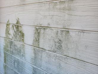 サイディング外壁の防水性の低下により苔が発生