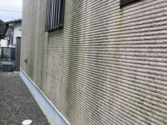 外壁に発生したコケ
