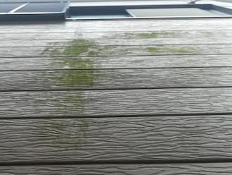 サイディングの苔