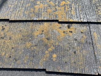 屋根に生えたコケやカビ