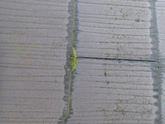 スレートの重なり部分には雨染みが目立ち、苔の繁殖も見られます