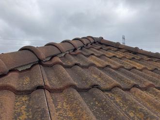 屋根の全体像