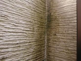 窯業系サイディング外壁に苔が発生している