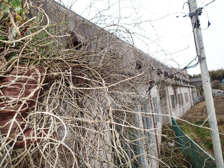 蔦の生えた市原市の工場の外壁