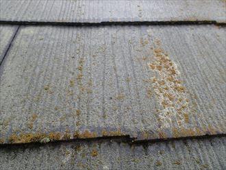 木更津市 防藻性能の低下